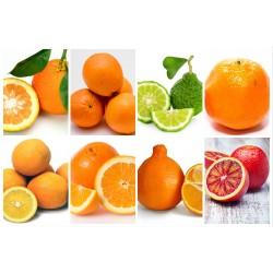 Name That Orange! The Modern Farmer Guide to Orange Varieties