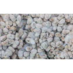 AP issues notice to Nuziveedu, Kaveri for HT cotton seed use